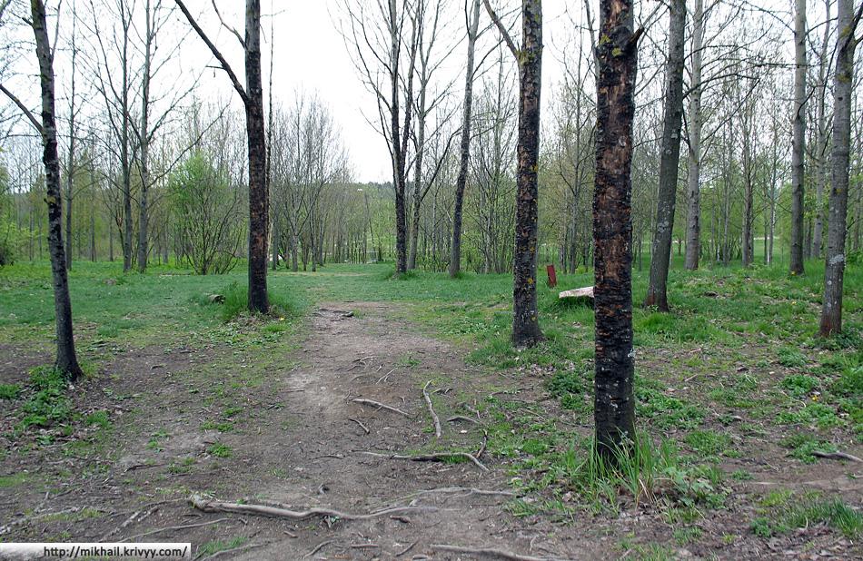 Деревья страдают от диск-гольфа