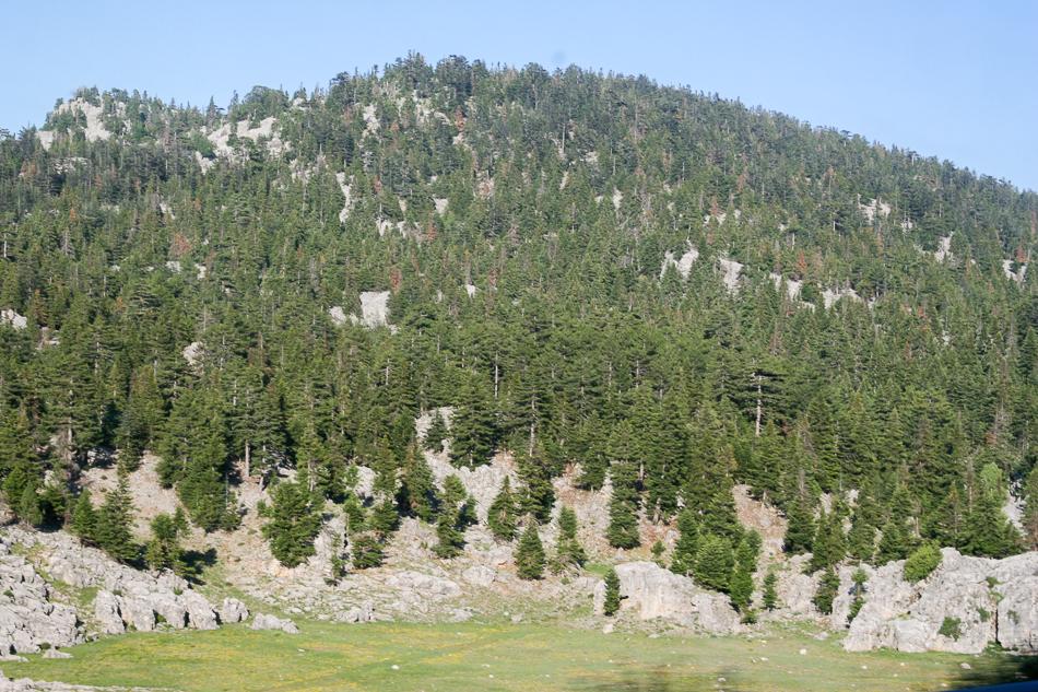 Чем выше в горы, тем зеленее.