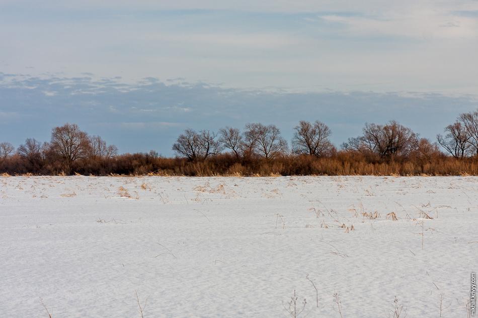 Издалека Мсту выделяли ряды прибрежных деревьев.