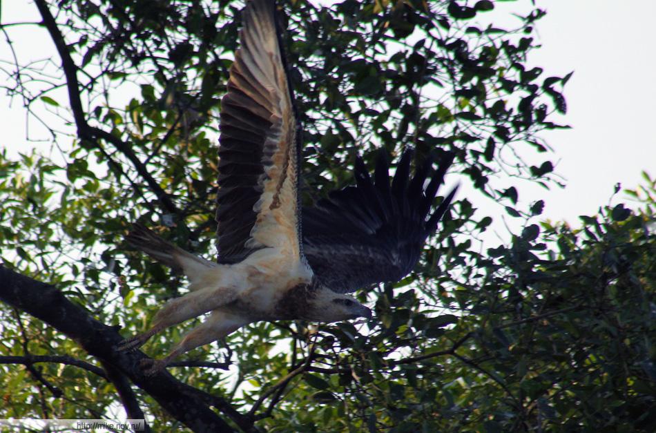 Некоторые птицы даже моторную лодку подпускали очень близко.