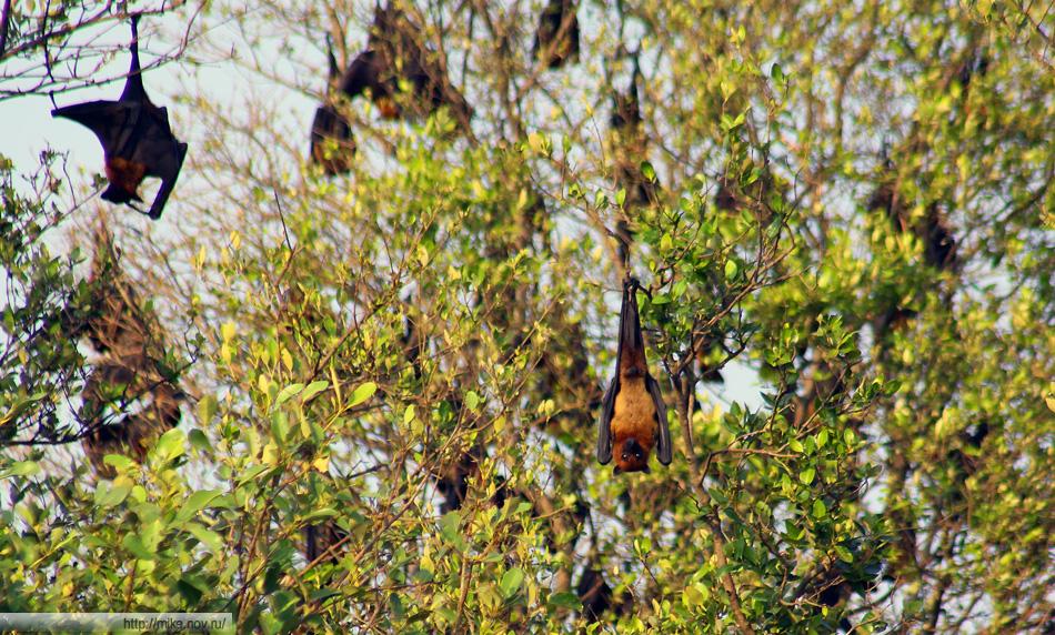 Бардак на дереве с летучими мышами (?) напоминал наших чаек.