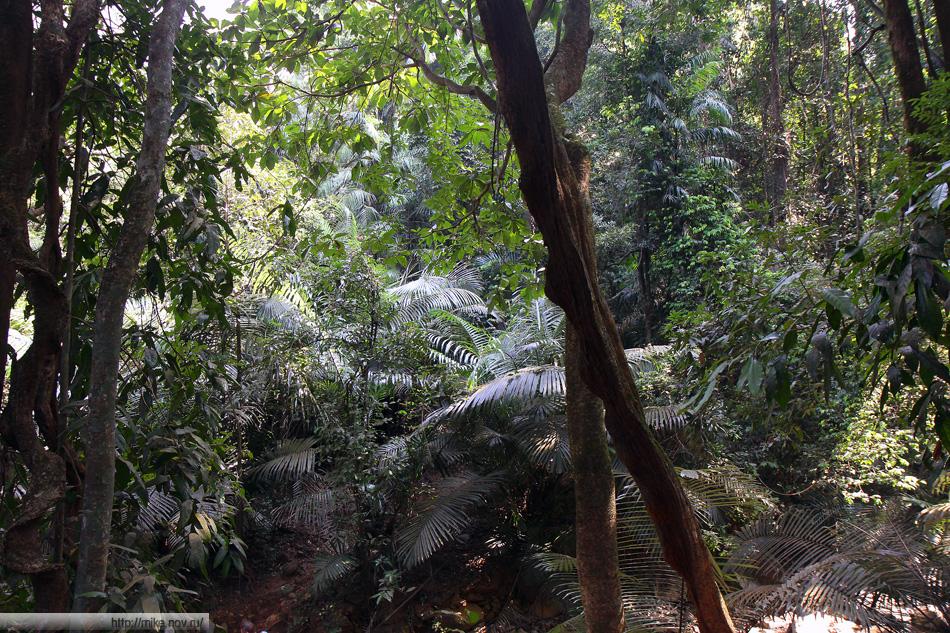 Река Мандов в районе водопада Дудсагар