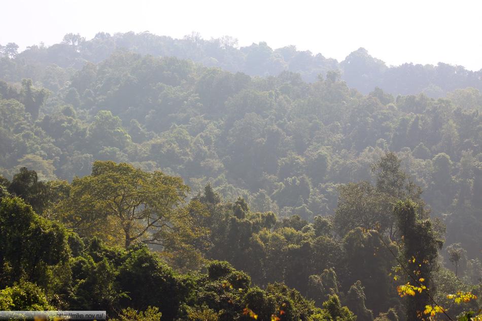 Вид на индийский джунгли от водопада Дудсагар