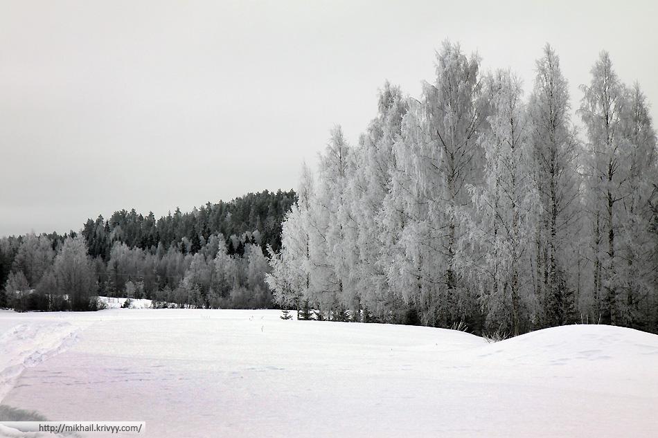 Леса и поля в районе клубничной фермы.
