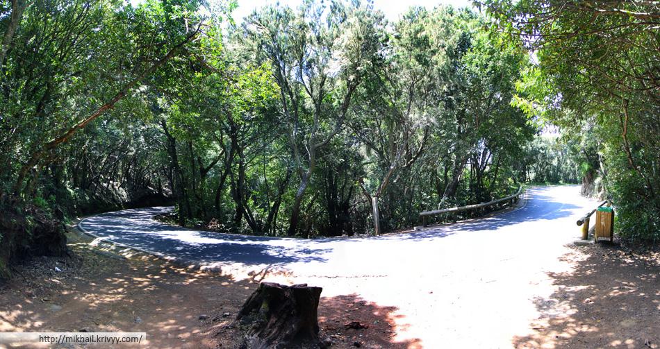 Серпантин в лесу Анага (Anaga), Тенерифе, Испания (панорама)
