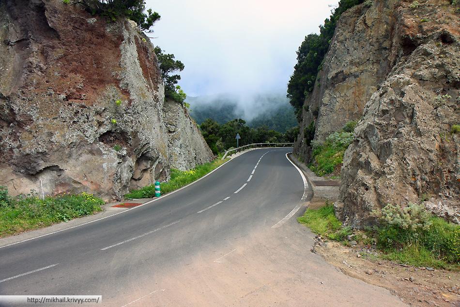 Дорога через лес Анага (Anaga), Тенерифе, Испания