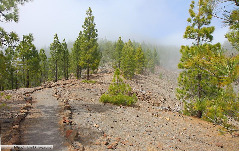 По этой дороге мы дошли до указателей и свернули на туристическую тропу. В отличии от Карпат, сойти с маршрута невозможно. В этот момент облачная влажность рассеялась, стало немного темнее.