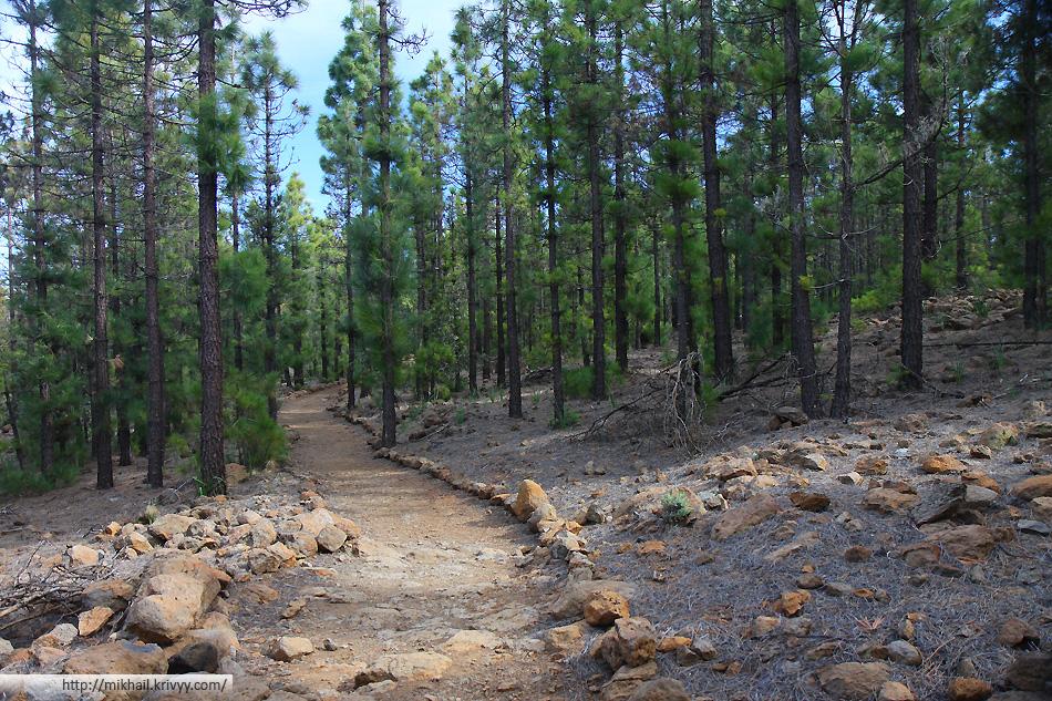 Дорожка через лес.