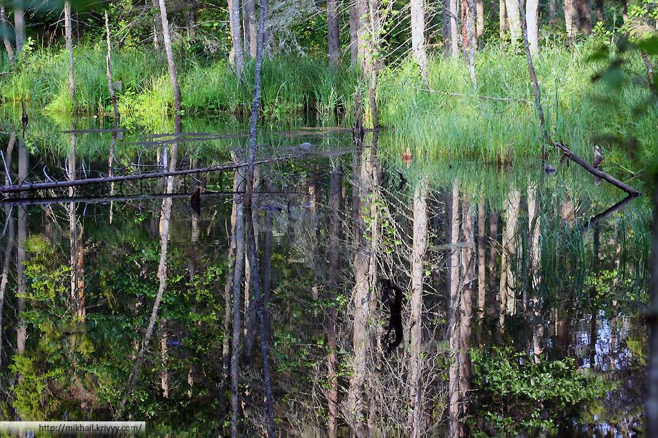 Рядом с нашим озером было болото изобилующее небольшими прудами. В прудах все время кто-кто копошился, создавалось ощущение, что еще немного и появится выхухоль.