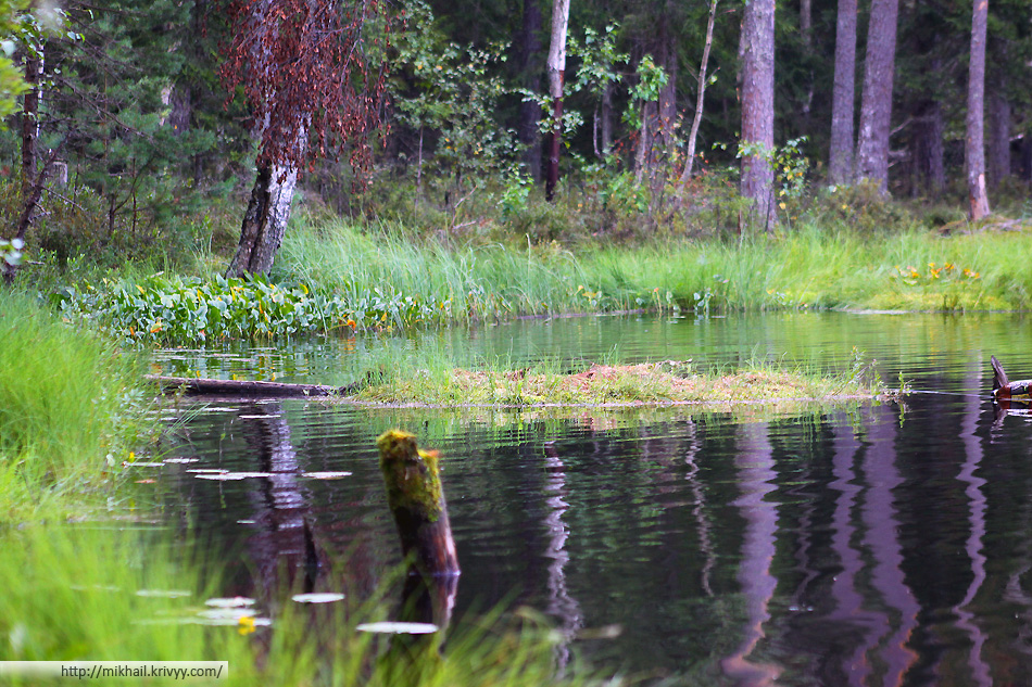 Берега озера не болотистые, из воды торчат стволы деревьев. Можно предположить что озеро появилось на этом месте достаточно быстро.