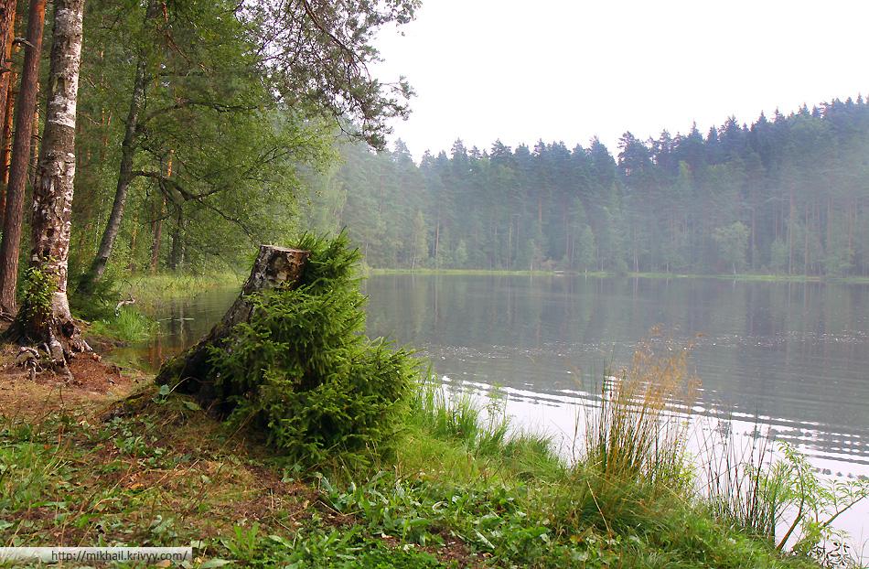 Живописный пень на берегу озера.