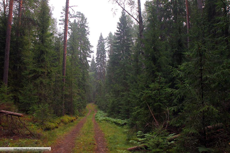 Лес в окрестностях озера.