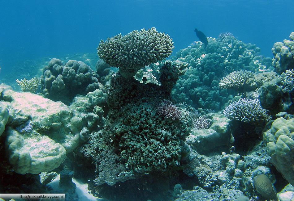 """Коралловый риф в """"Доме дельфинов"""""""