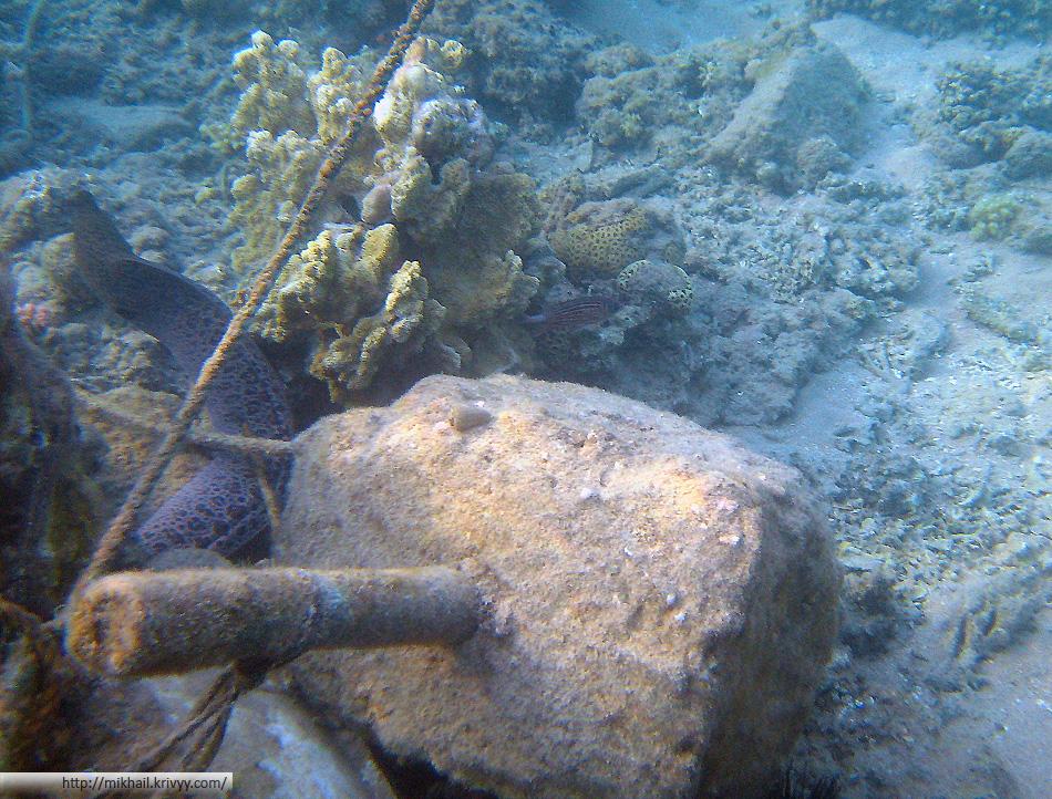 Гигантская мурена. Не очень удачный кадр, но как то не по себе было. Ближе подплывать не хотелось. Длина рыбы около 2.5 метров.