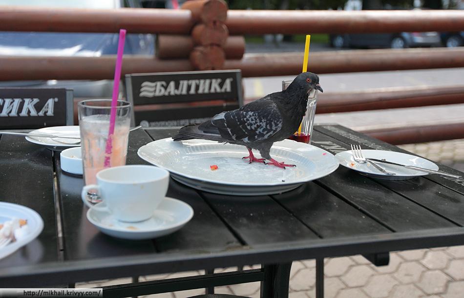 У нас тут подают голубятину в собственном соку :)