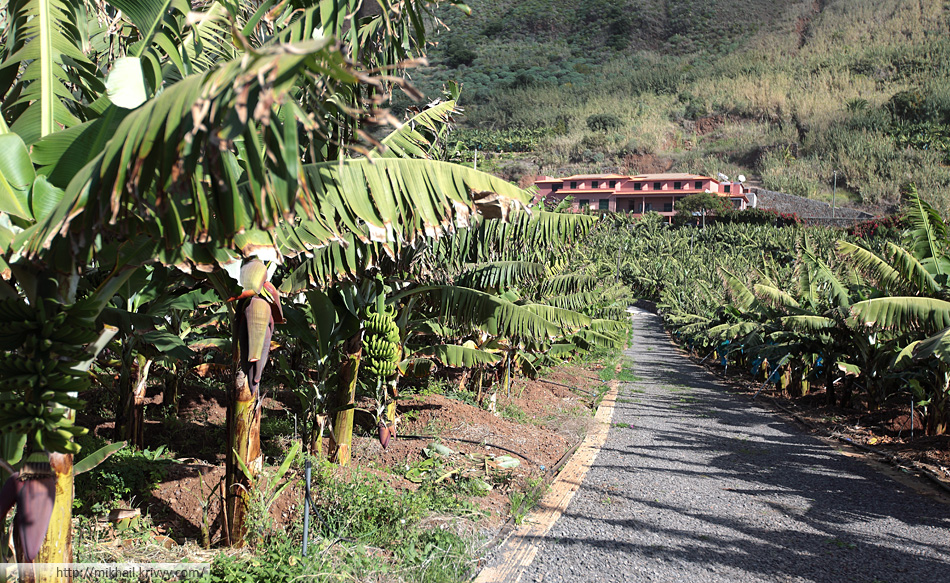 Банановая плантация. Паол Ду Мар (Paul Do Mar), Мадейра, Португалия