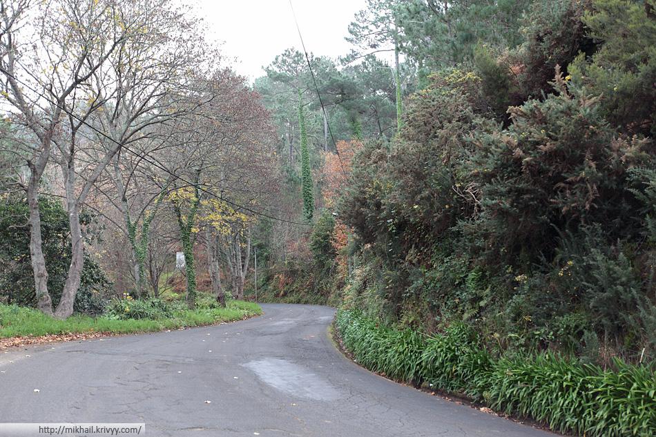 Метров с 600 начинается лес. Не очень густой. Тут пахнет осенью. Местами на дороге листья.