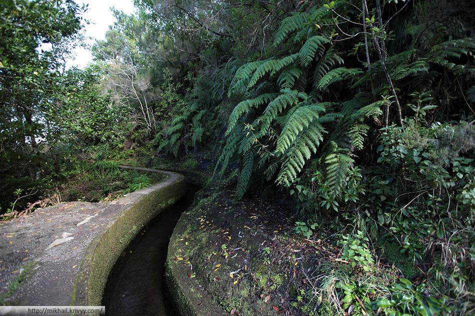 Растительность северного склона коренным образом отличается от растительности южного склона.