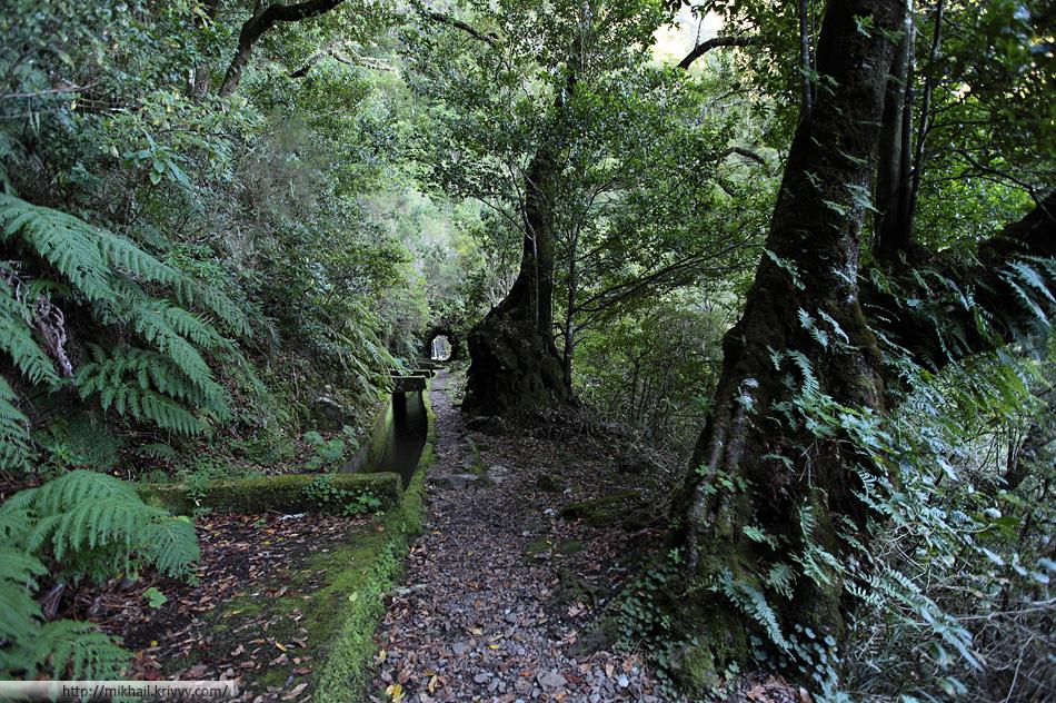 Некоторые деревья северного склона особенно бросались в глаза.