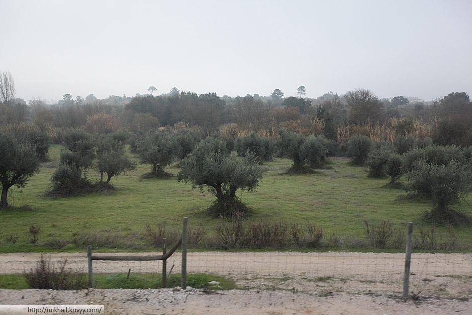 Мы немного посмотрели на Португалию из окна поезда.
