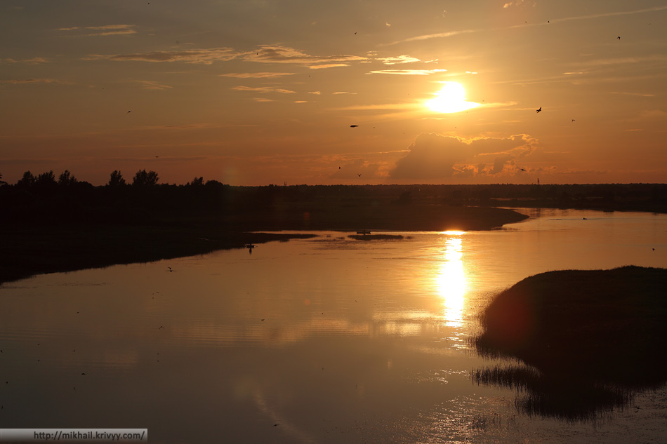 Ласточки. Река Мшага. Шимский район.