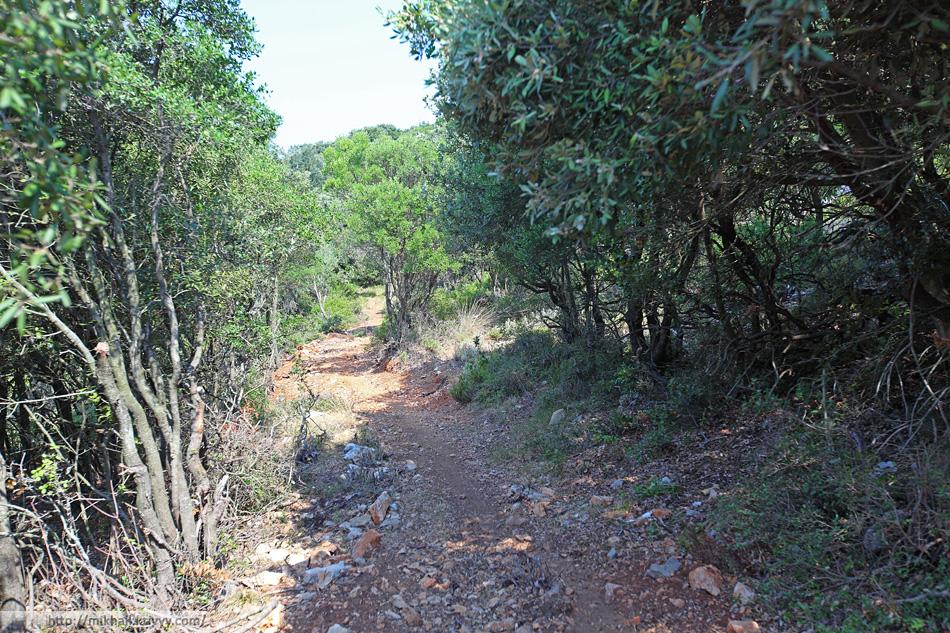 Каменная дорожка почти сразу превращается в тропинку. По тропинке идти удобнее.