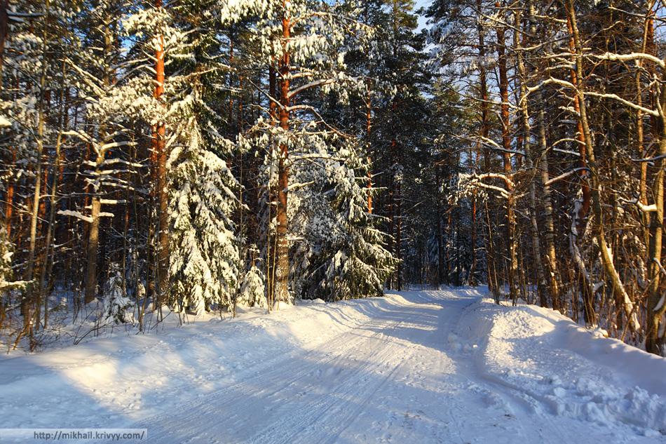 Зимний лес. Новгородская область.