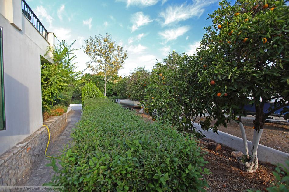 Апельсиновый сад. Вид из дверей номера гостиницы Sunny Garden Studios.