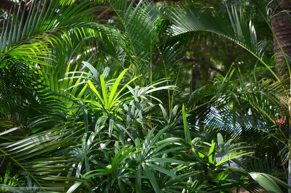 Растительность в восточной части парка.