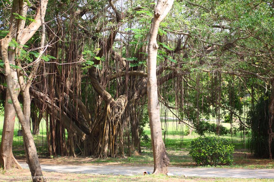 """Растительность в восточной части парка """"Край света""""."""