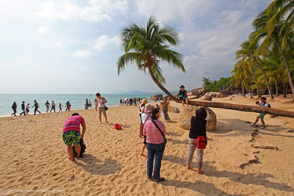Чтобы сфотографироваться на этой пальме нужно отстоять импровизированную очередь.