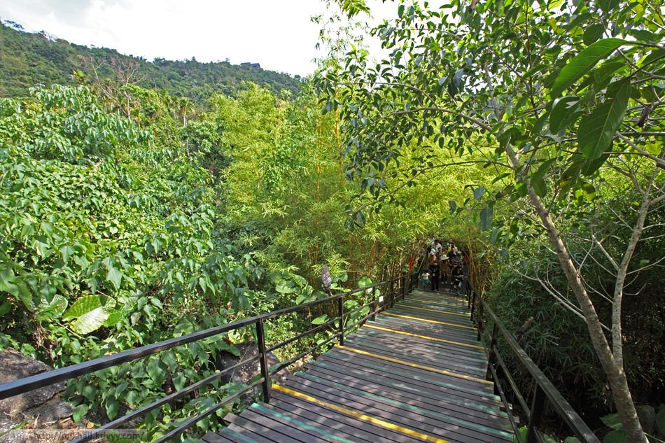 Группа туристов и бамбук. Парк Янода. Хайнань. Китай.