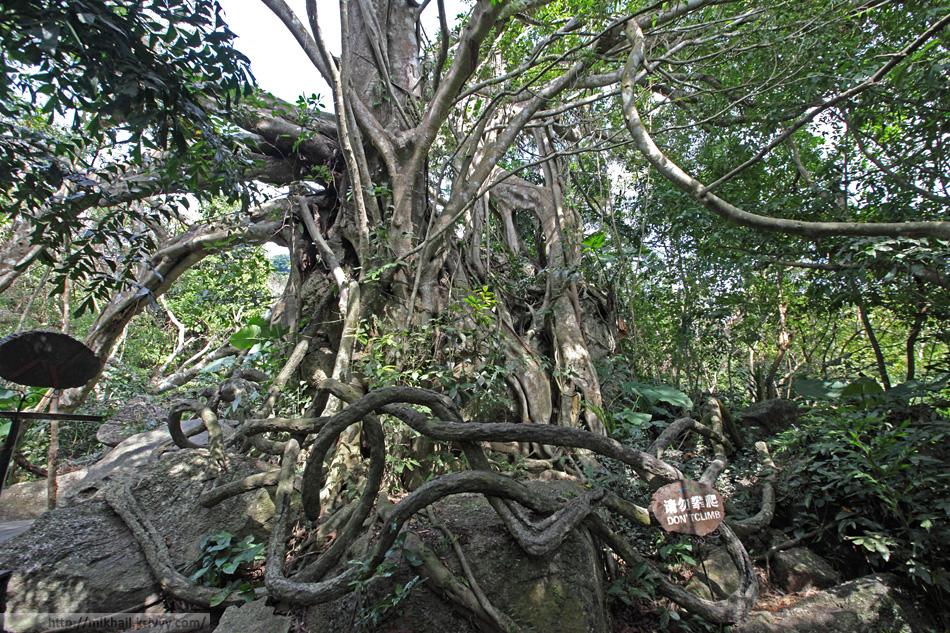 Некоторые деревья дополнены искусственными корнями для антуража.Парк Янода (Yanodo). Хайнань. Китай.