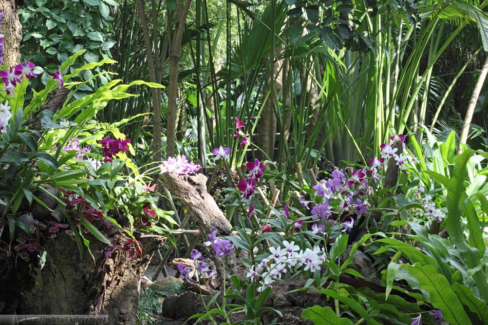 Нетронутая природа - орхидеи в горшочках. Парк Янода (Yanodа). Хайнань. Китай.