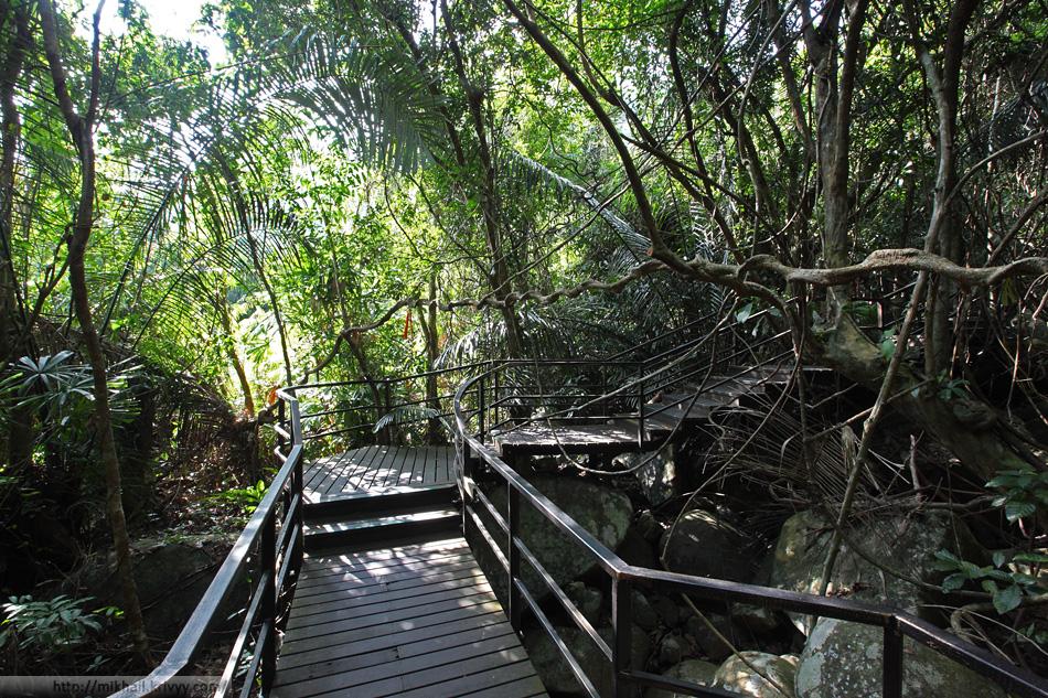 Самое темное место в лесу. Национальный парк Янода. Хайнань. Китай.