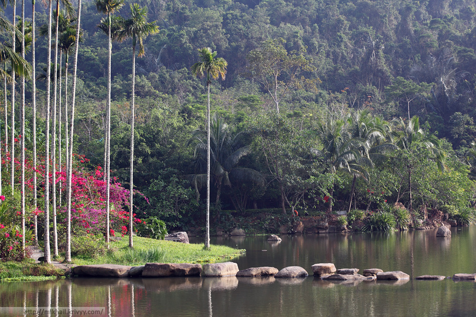 Центральный пруд. Местная растительность. Национальный парк Янода. Хайнань. Китай.