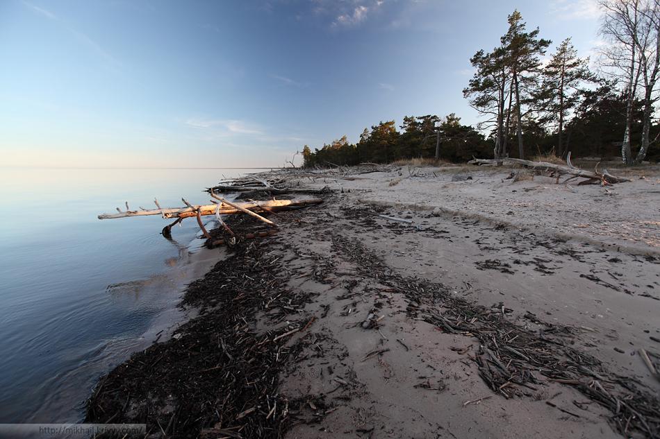 Вид по побережью Рижского залива. Пляж тут узкий и изобилует поваленными деревьями.