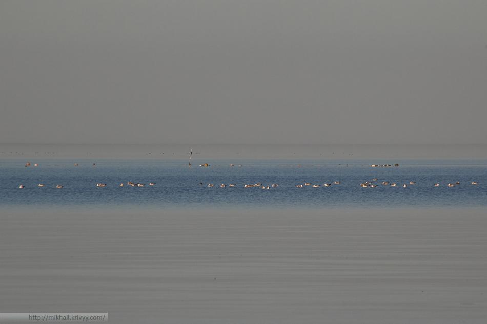 Надо отметить, что море в этот день больше походило на озеро. Да и вообще, западное побережье Рижского залива мало похоже на морское.