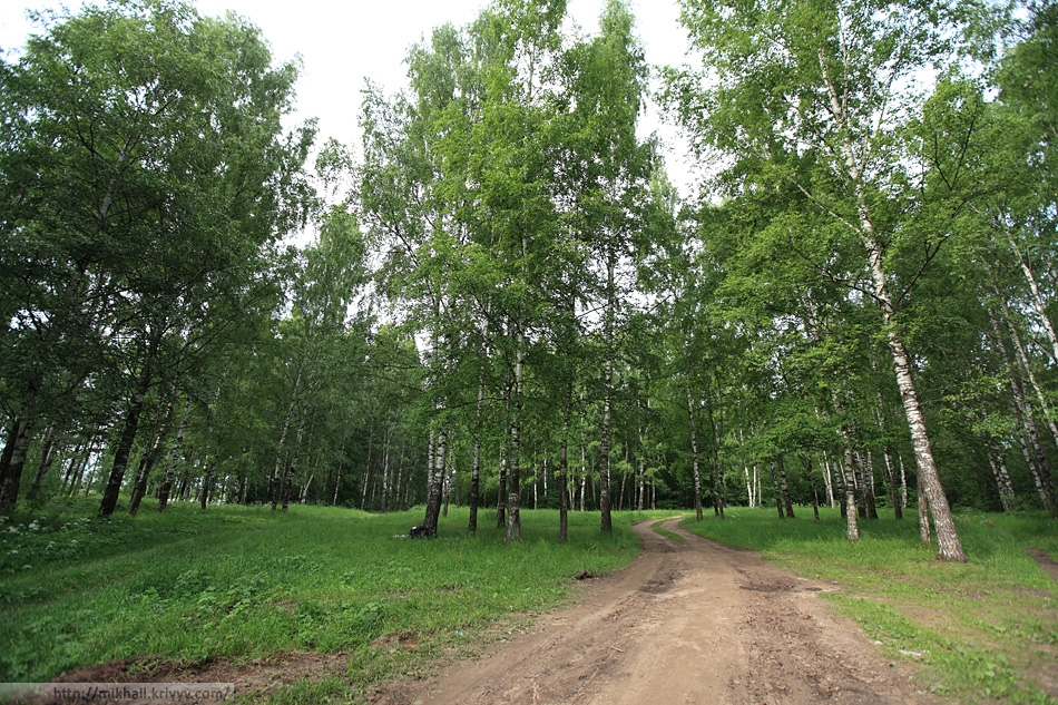 Деревяницкий лесопарк.