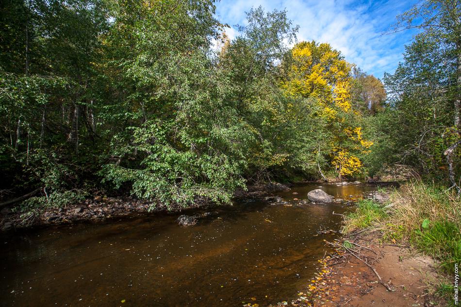 Река Ярынья ранней осенью.