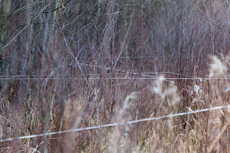 Весь лес размечен вот такими веревочками.