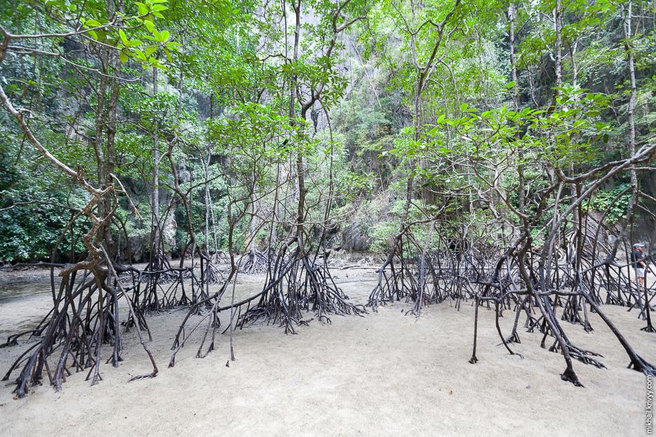 Внутри хонгса небольшие наносы песка, глины и мангровые деревья.