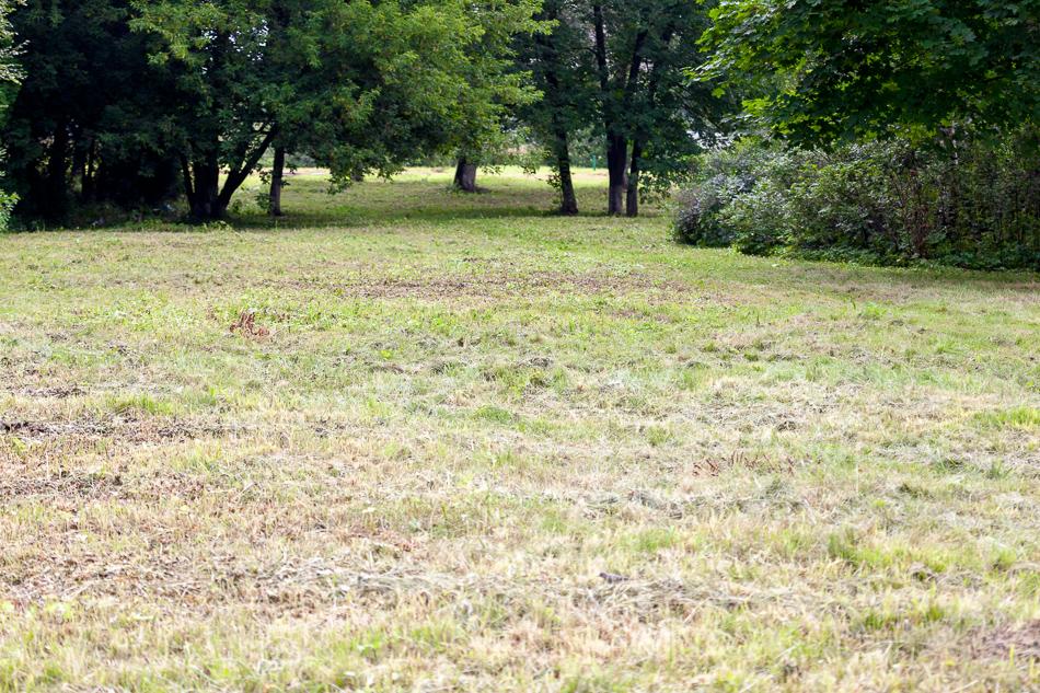 """Вот так выглядит """"газон"""" подстриженный триммером."""
