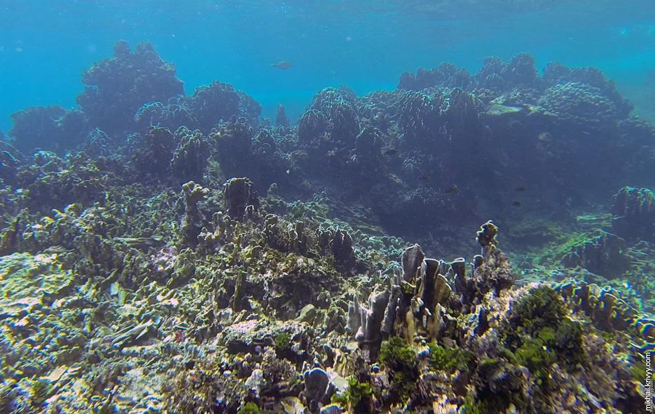 В целом, под водой, мы наблюдали примерно такую картину.
