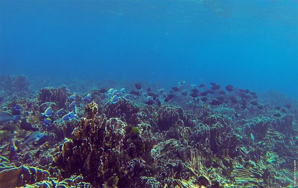 Ниже немного фотографий сделанных из подводного видео.