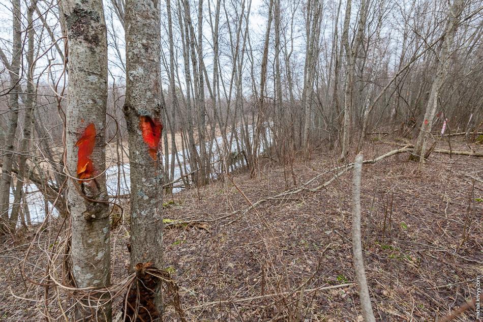Отметки в лесу под будущую просеку.