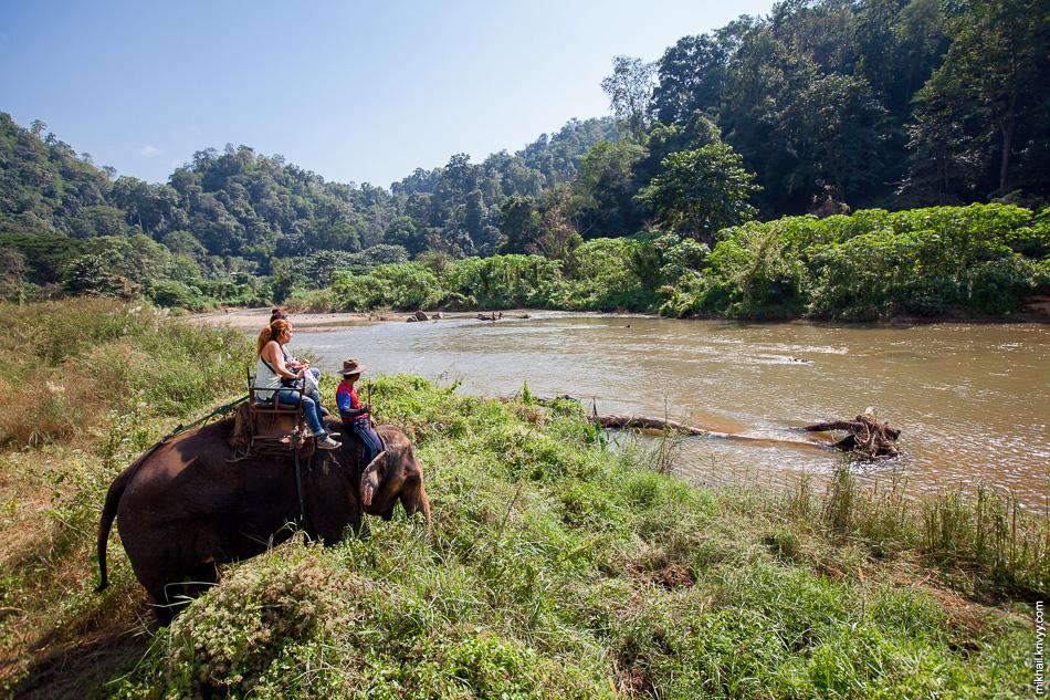 Катание на слонах входило в нашу экскурсию. В принципе, удобно. Эдакая ходячая стремянка для фотографа.