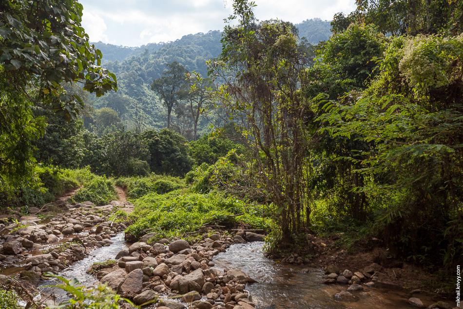 Мы спешились и пошли вдоль ручья по джунглям.