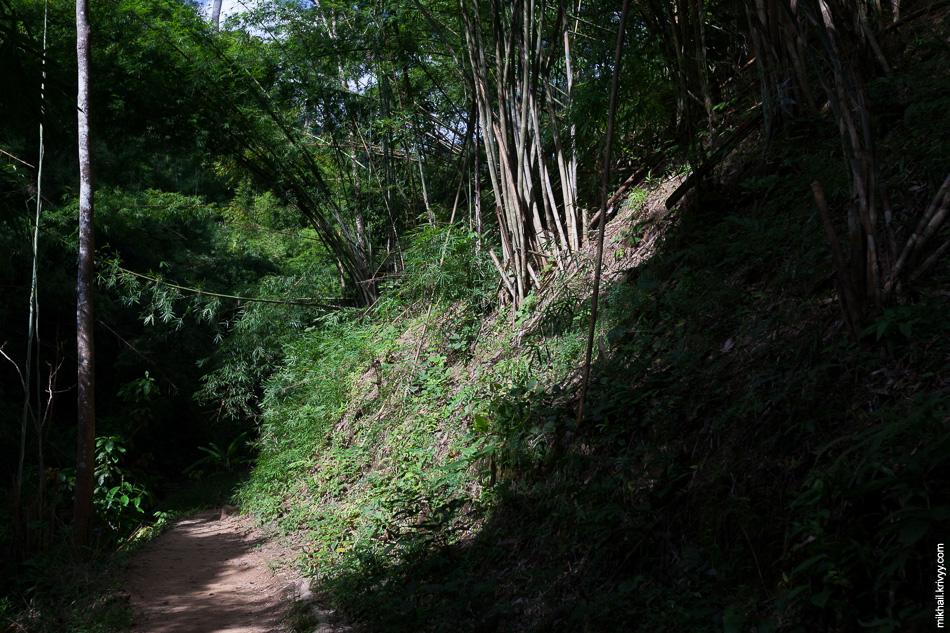 Джунгли правильные. С бамбуком и темные-темные.