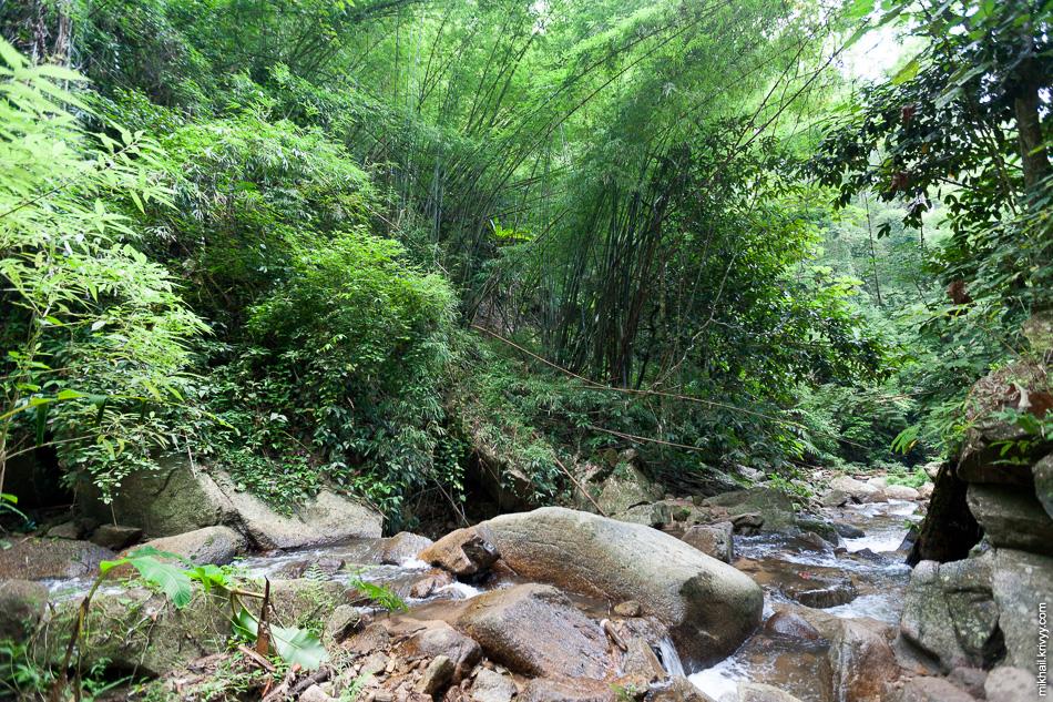 Джунгли северного Таиланда.